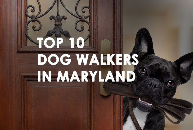 Top 10 Dog Walkers in Maryland